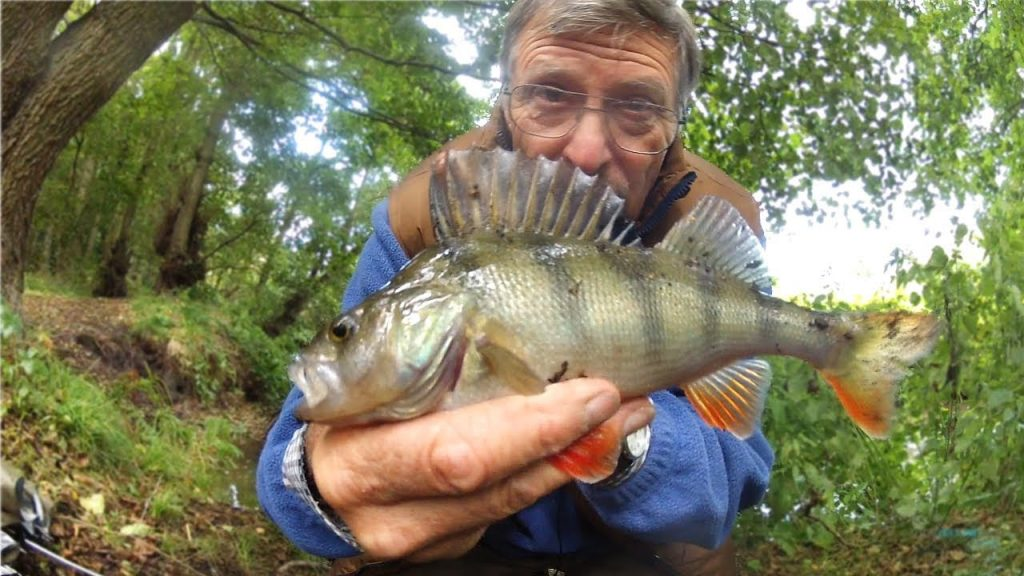 CREEK FISHING with a PEN ROD – NOT FISHED FOR 50 YEARS!!