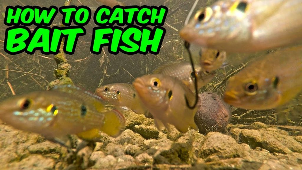 Micro Fishing! HOW TO CATCH BAIT FISH!!!