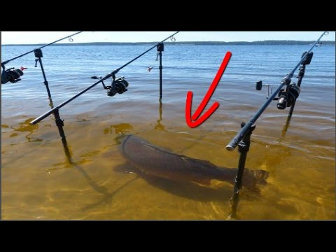 Fish Attack – Strangest Types of Baits for Fishing methods. – Fishing Compilation 2016 #Top6Fishing