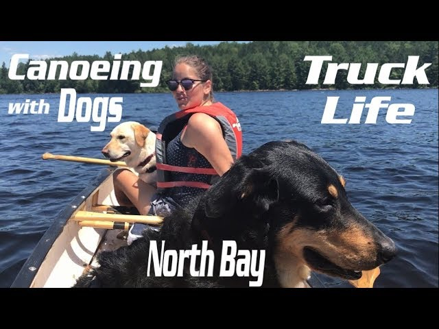 Canoeing with dogs in Canada – RV Life