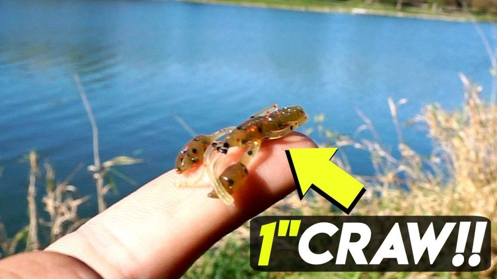 Micro Fishing w/ TINY Larva Baits CHALLENGE!!! (Surprise Catch)