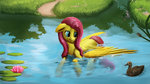 camyllea duck fluttershy highres pond swimming water