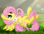 angel big-mac-a-brony fluttershy highres