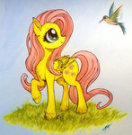 bird fluttershy traditional_art zetamad