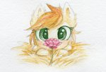 0okami-0ni filly flowers highres rose traditional_art