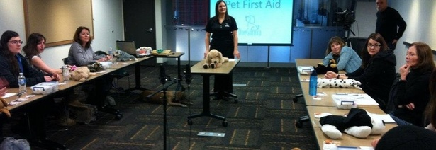 Pet First Aid Course - Dog Guru