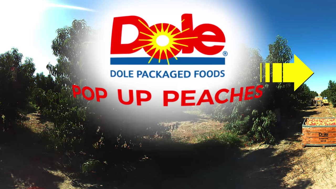 SEED TO SHELF: 360° Video of Dole's Peach Farm - Discover some fun facts!