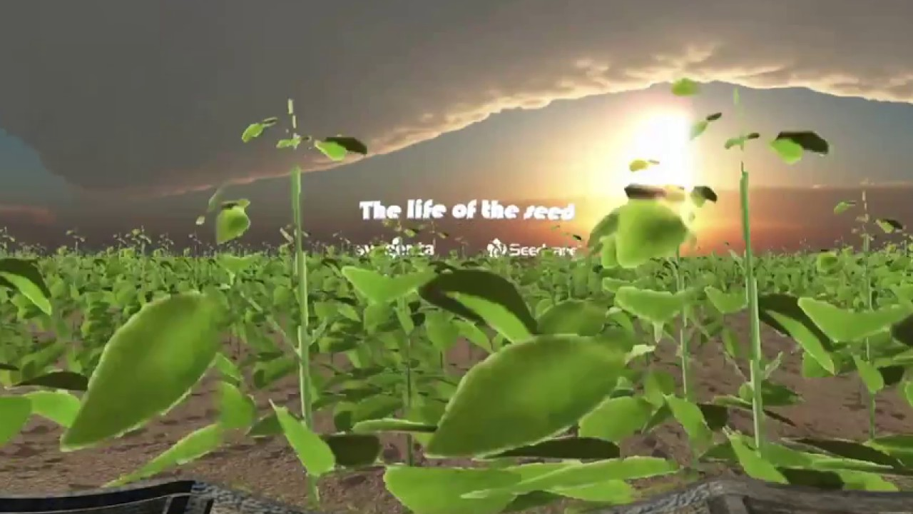 Syngenta 360° // The Life of the Seed
