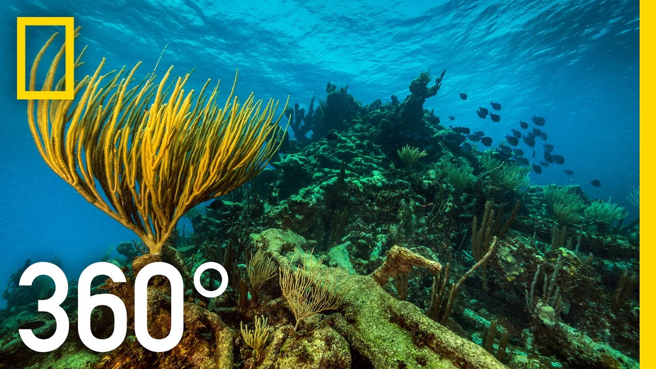 360° Underwater National Park | National Geographic