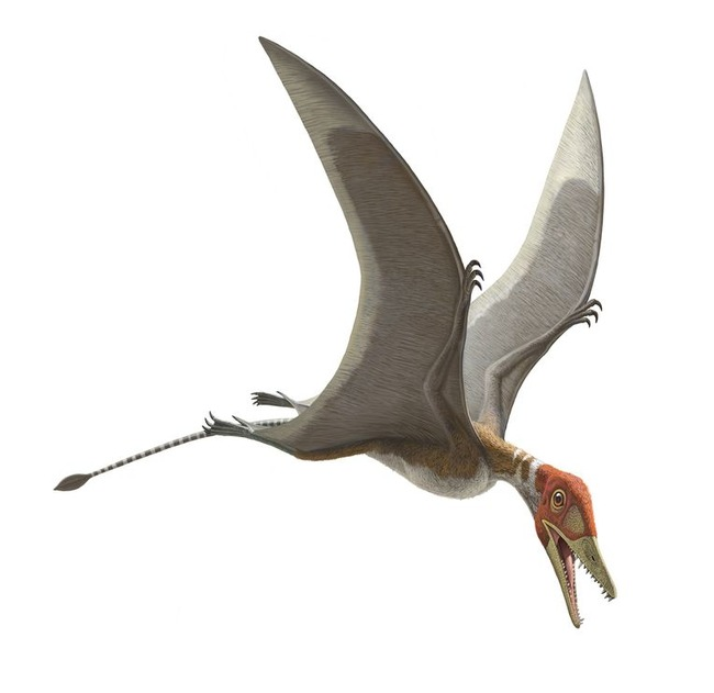An illustration of a Preondactylus buffarinii Pterosaur.