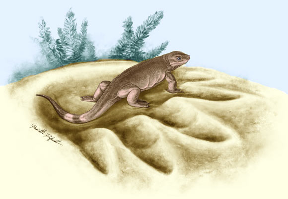 This is an artist's reconstruction of Eocasea martini. Image credit: Danielle Dufault.