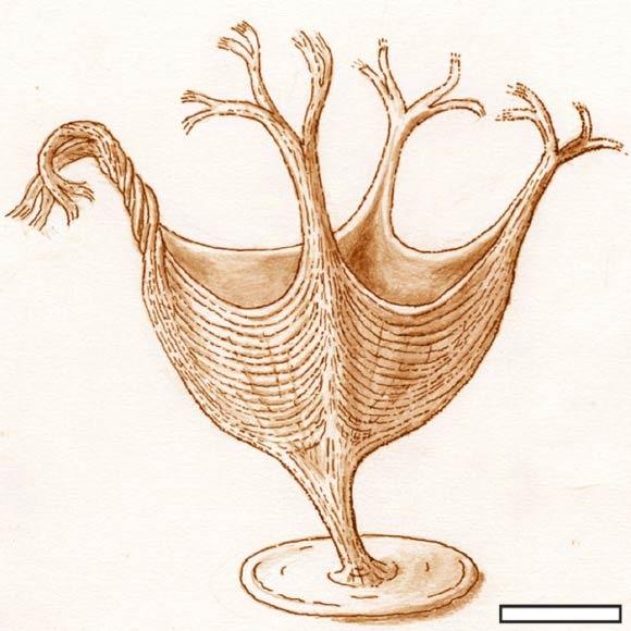 Artistic reconstruction of Haootia quadriformis. Scale bar - 10 mm. Image credit: Martin Brasier.