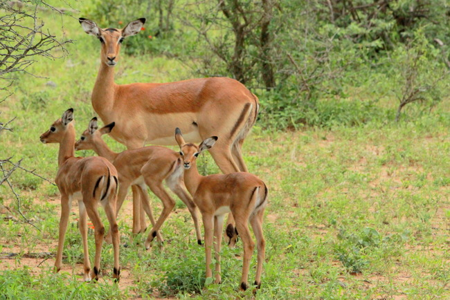Image result for Antelope mom and baby