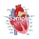 Medical Scientific Samples