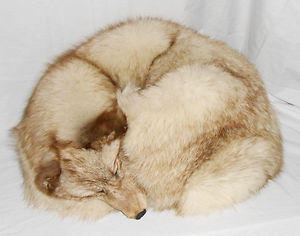 Vintage Arctic Fox Sleeping Pillow