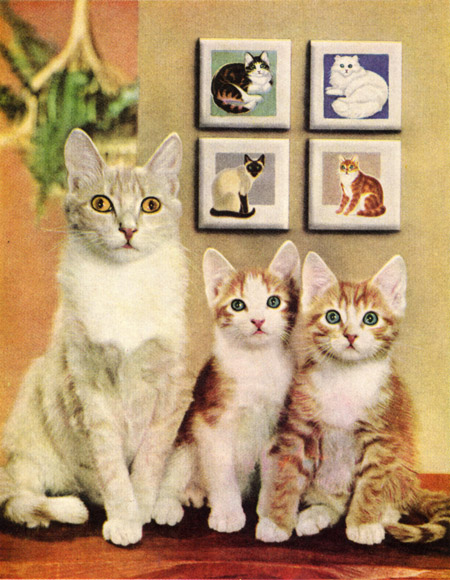 Something is wrong with these cats' eyes, or they're in terror.