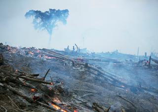 Don't buy deforestation paper