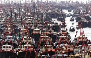 Promote Sustainable Fishing