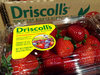 Boycott Driscolls Berries For Their Abuse of Field Workers