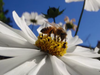 Save and support the Bees as much as you can!