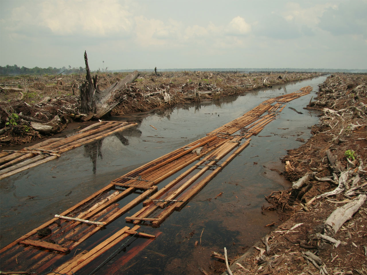 Say No to unsustainable Palm Oil