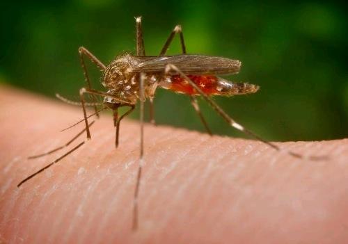 Monmouth County Monitoring Zika Virus Situation