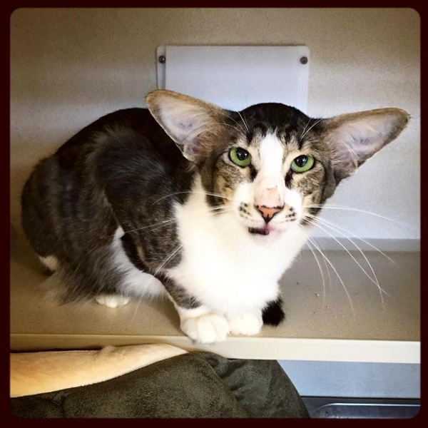 Monmouth County SPCA Cat Gains National Notoriety
