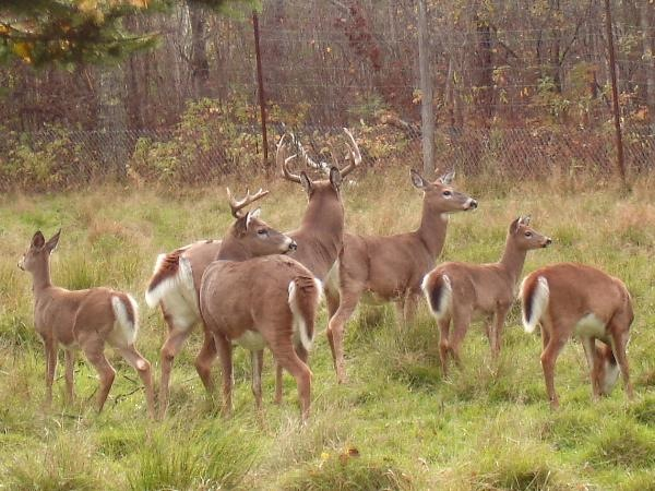 Eatontown Looking To Address Deer Population Problems