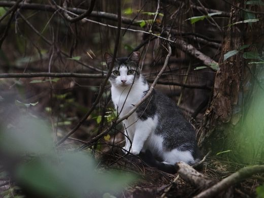 Long Branch To Try 'Trap, Neuter And Release' Program For Feral Cats