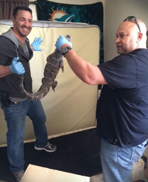 Long Branch Police Find Gator While Executing Search Warrant