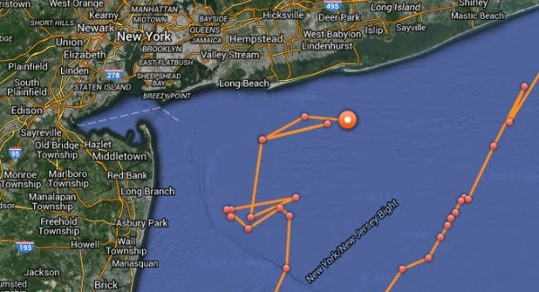 Great white shark being tracked off njny coast wordontheshore mary lee a 16 foot 3456 pound female great white shark is currently being tracked off the coast of new york after coming just a few miles off the coast publicscrutiny Gallery