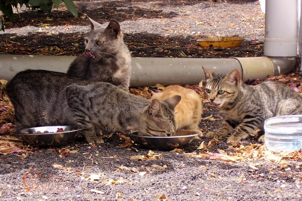 Long Branch Ordinance Would Help Control 'Nuisances' Caused By Cat Colonies