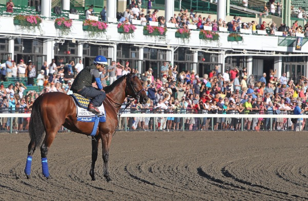 American Pharoah Has His Morning Gallop at Monmouth Park