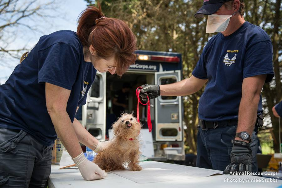 Among those rescued was a dog whose tiny body bore signs of extreme neglect, with filthy, matted fur, nearly no teeth, and just three legs.