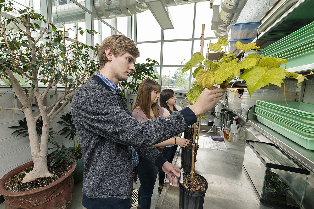 MTSU undergraduates make strides  with published grape research