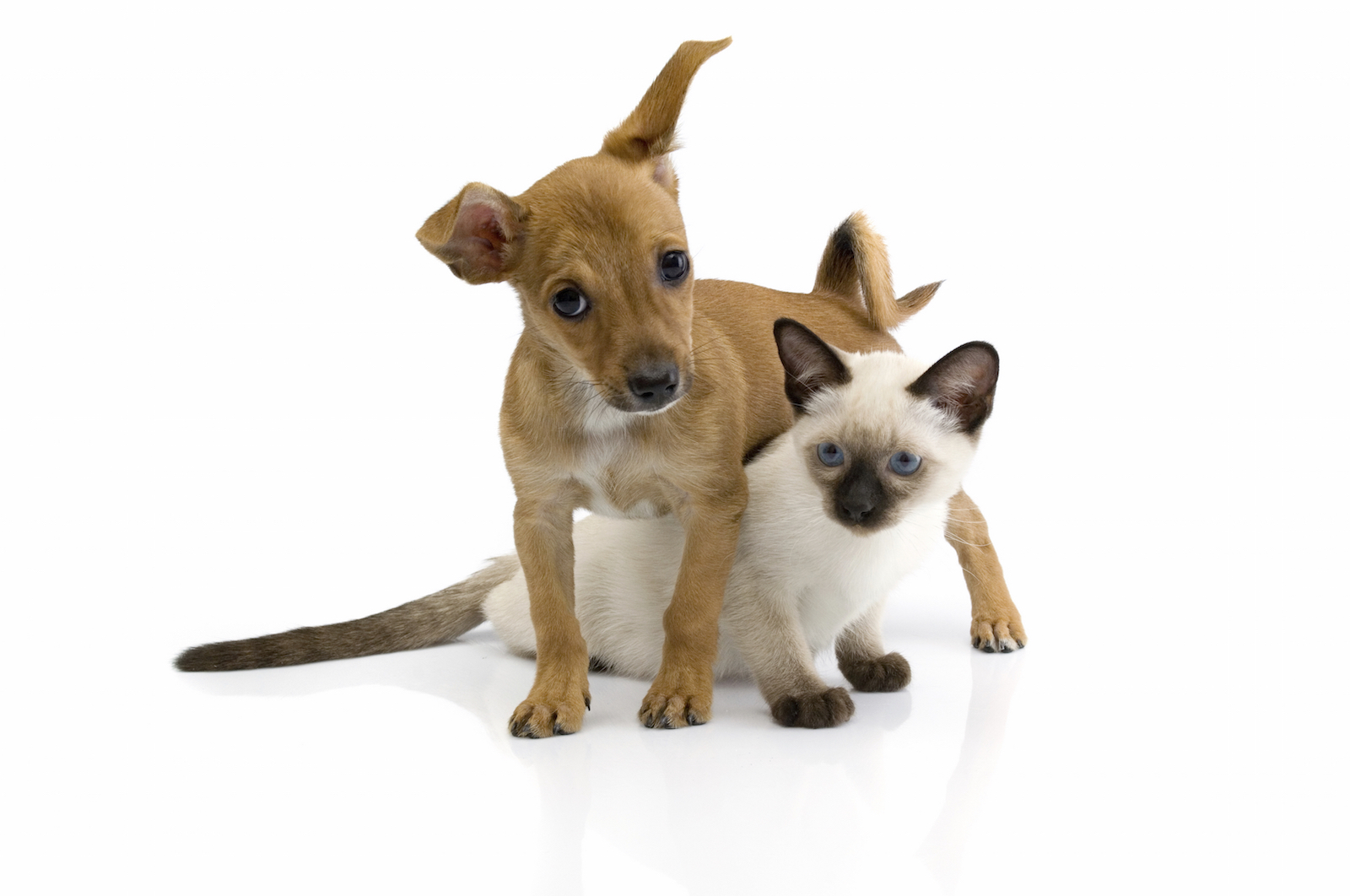 The Stones River Town Center will host a special event for animal lovers.  Amanda Oliver with Beesley Animal Foundation told WGNS about the event.