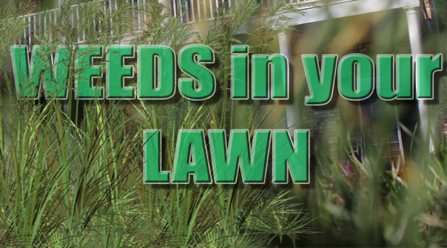 Weeds are probably the most common pest of home lawns and landscapes. They compete with desirable plants for space, water and nutrients and can detract from the overall general appearance of a lawn or garden.