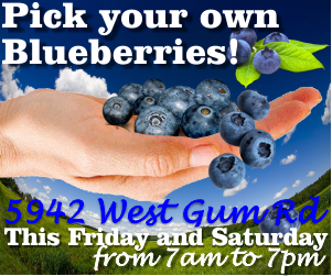 Pick Blueberries in Murfreesboro This Weekend