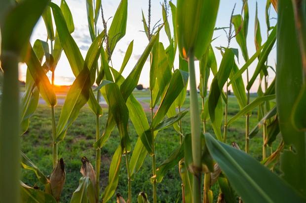 Agriculture Enterprise Fund Sparks $40 Million in Economic Activity