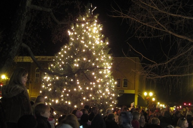 SEARCH IS ON: The perfect Christmas Tree is needed for downtown Murfreesboro