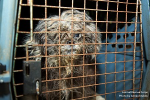 90 Dogs, puppies and cats rescued in Manchester, TN