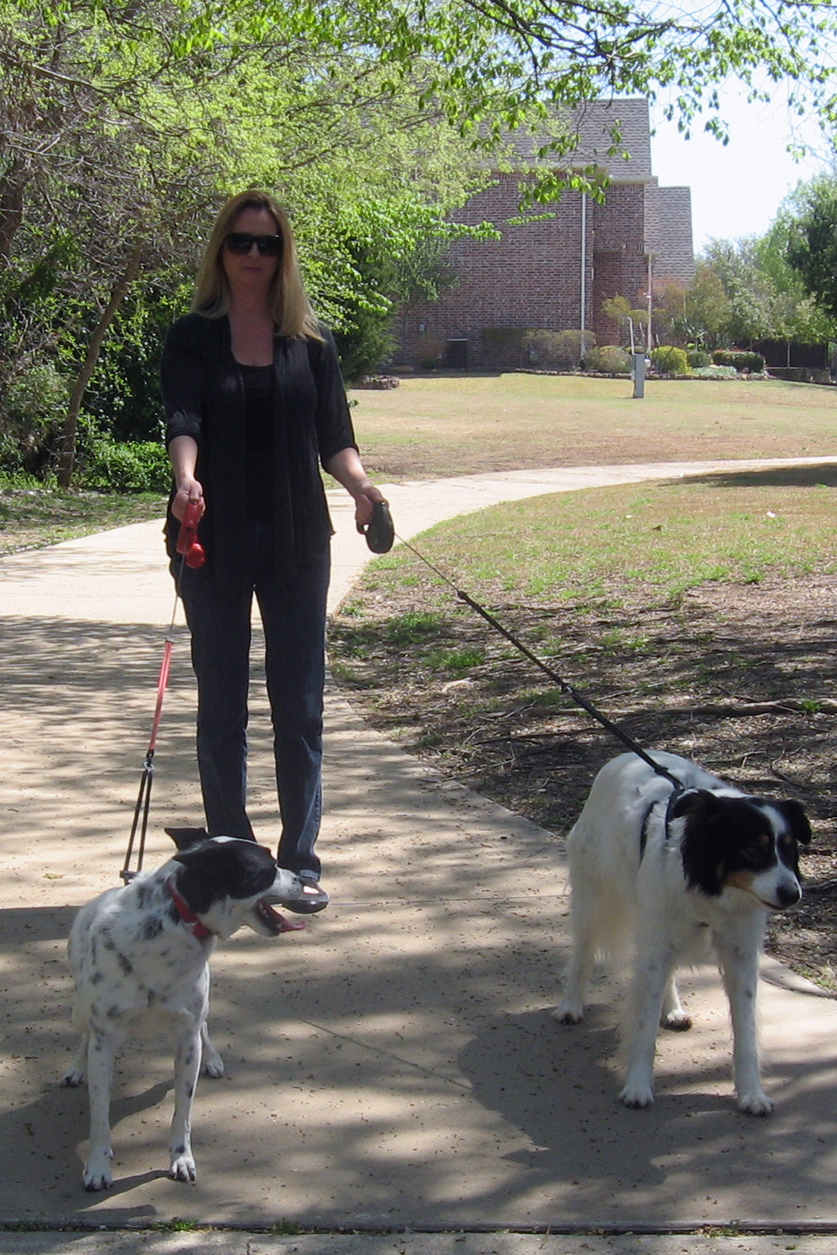 Hounds for Heart Dogs Invited to Rutherford Heart Walk