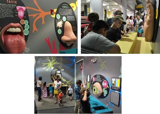 Human Senses - Special Exhibit on display now in Murfreesboro