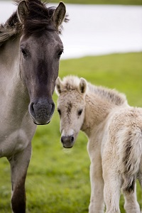 Rutherford County farm responds to allegations of horse abuse