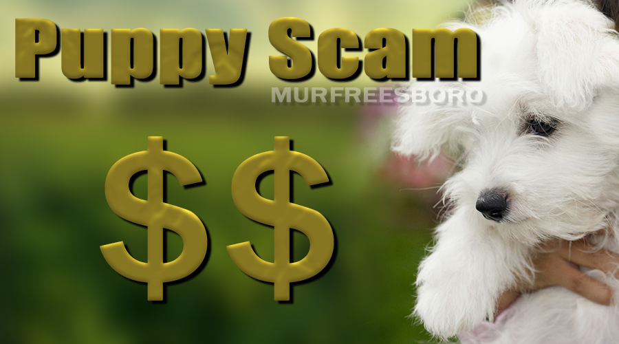 BBB Warning: Puppy Scam Reports Skyrocket During COVID-19 Pandemic