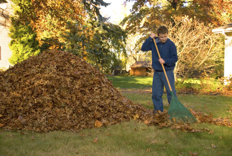 Fall Leaf Collection in Murfreesboro