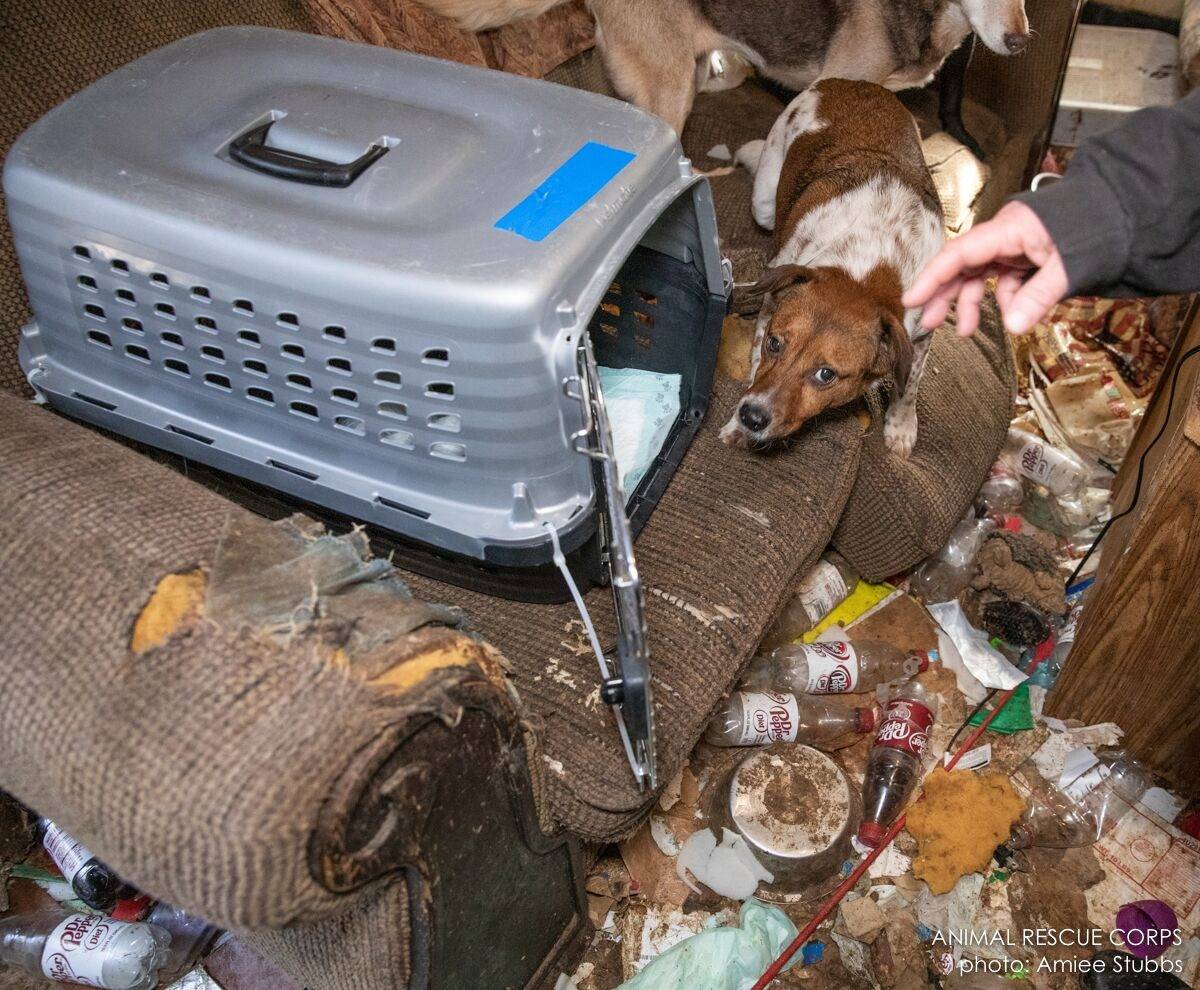 The Animal Rescue Corps (ARC) responded to a request from authorities in Henderson County, TN to assist with 54 cats and dogs living in deplorable conditions in and around a single-family residence.