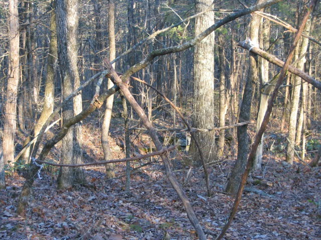 Tennessee State Parks will host its annual Camp Out