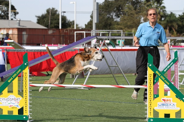 Dog Agility World Championships Returning to Murfreesboro
