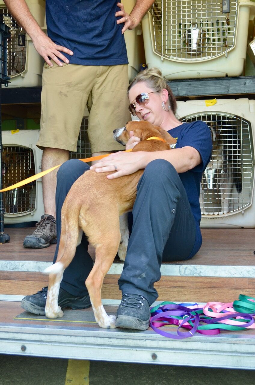 156 Dogs and Cats - Some in Lebanon and Brentwood, TN from Operation Hurricane Harvey Relief Effort